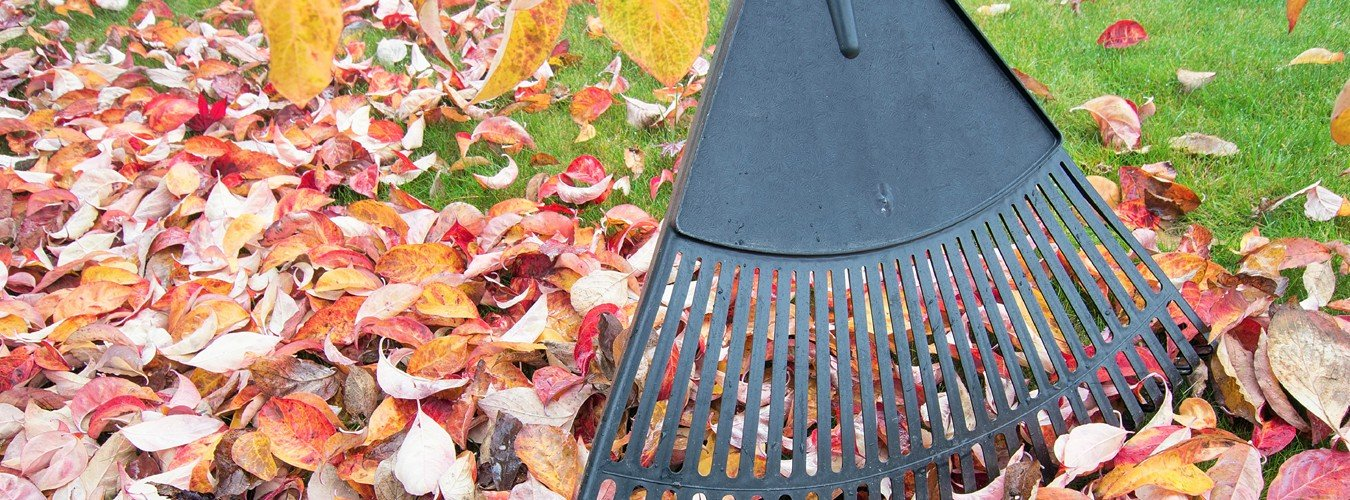 seasonal yard cleanup services