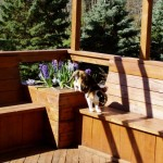 cat walking across built in deck benches
