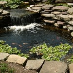 Pond with waterfall and fish swimming around